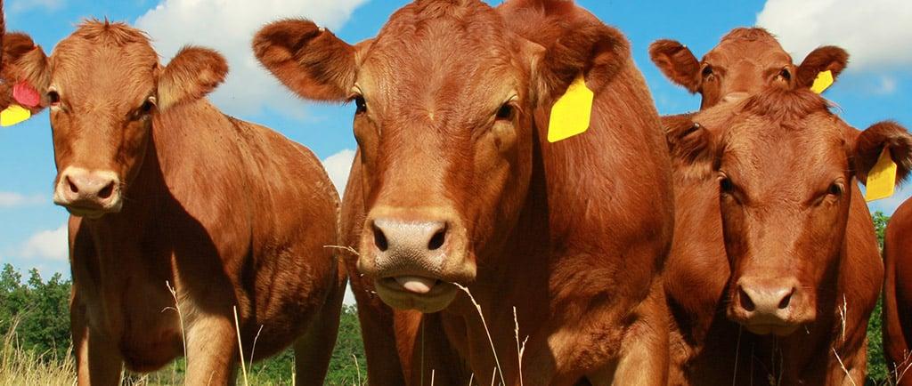 INTL FCStone - Meats/Livestock